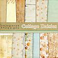 Cottage Daisies